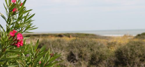 Brush on a remote barrier island with the ocean in the background