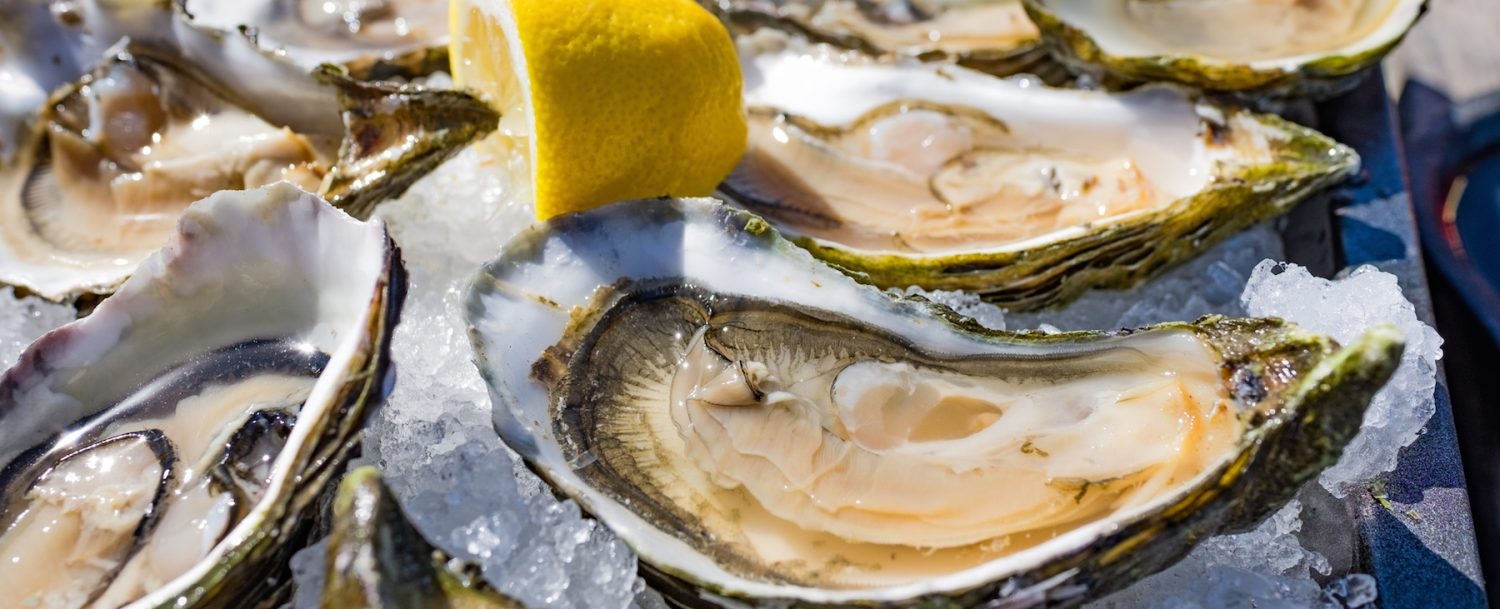 Half shell shucked oysters on a bed of ice