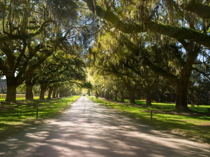 View of Boone Hall Plantation.